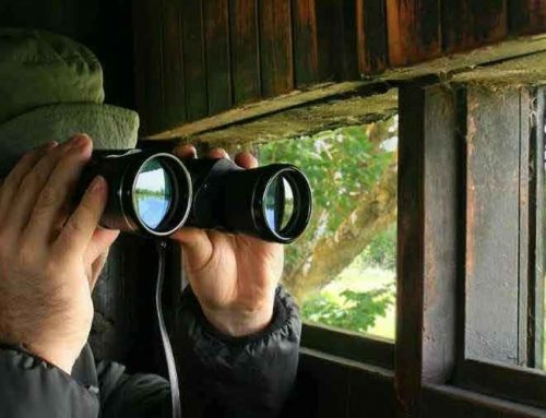 Why I Love Bird Watching