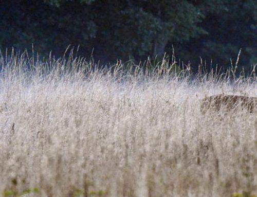 6 Things to do Before the Deer Hunting Season