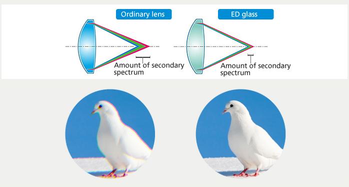 ED Glass
