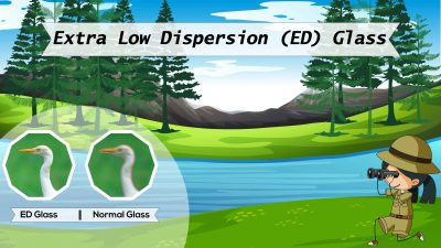 Low Dispersion ED Glass