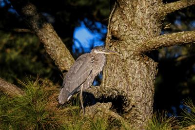 How to Start Bird Watching